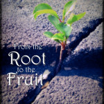 From the Root to the Fruit